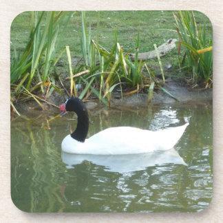 Black Necked Swan Coaster