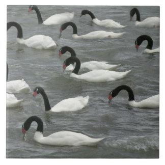 Black-necked swans (Cygnus melancoryphus) on Ceramic Tile