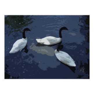 BLACK NECKED SWANS POSTER