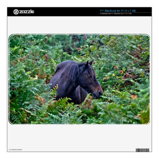 Black New Forest Pony & Forest U.K. Skin For MacBook Air