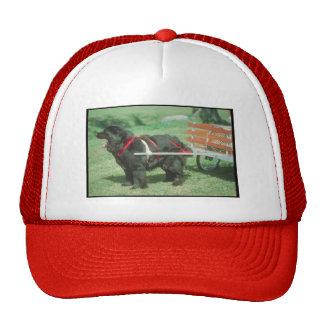 Black Newfoundland Trucker Hat