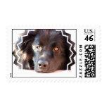 Black Newfoundland Postage Stamp