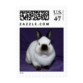 Black nosed Bunny Postage Stamp