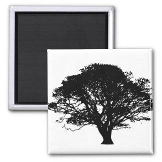 Black Oak Tree Design 2 Inch Square Magnet