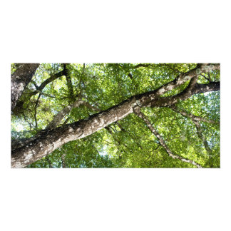 BLack Olive Tree Canopy Photo Greeting Card