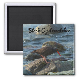 Black Oystercatcher 2 Inch Square Magnet