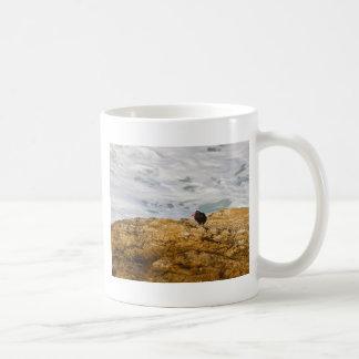 Black Oystercatcher Coffee Mug