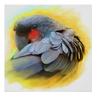 Black Palm Cockatoo realistic painting Poster