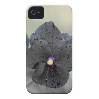 Black Pansy iPhone 4 Case
