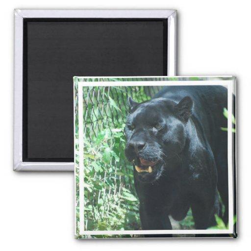 Black Panther Cat  Magnet Magnet
