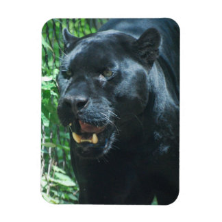Black Panther Cat Premium Magnet