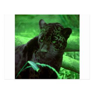 Black Panther Jaquar on Green Postcard