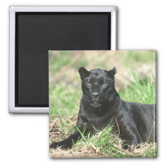 Black Panther Magnet