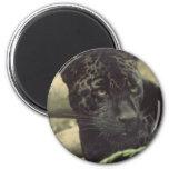 Black Panther Magnet Magnet
