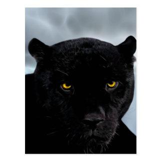 Black Panther Panthera Postcard