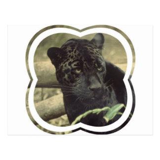 Black Panther Postcard