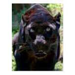 Black Panther Postcards