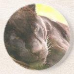 Black Panther Sleeping Coaster