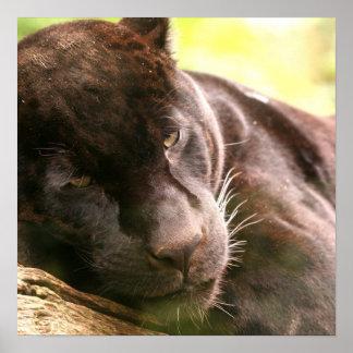 Black Panther Sleeping Poster