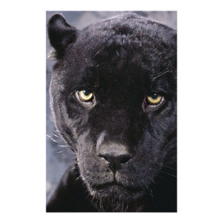 Black Panther Up Close Stationery