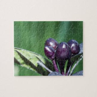 Black Pearl Pepper (Capsicum annuum) fruit and lea Jigsaw Puzzle