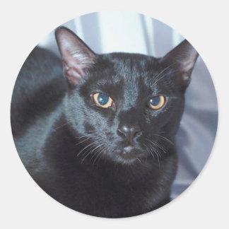 Black Pedigree Cat  1 Classic Round Sticker