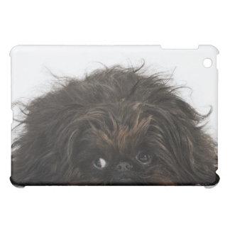 Black Pekingese dog lying down Cover For The iPad Mini