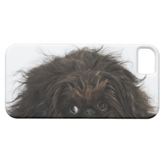Black Pekingese dog lying down iPhone SE/5/5s Case