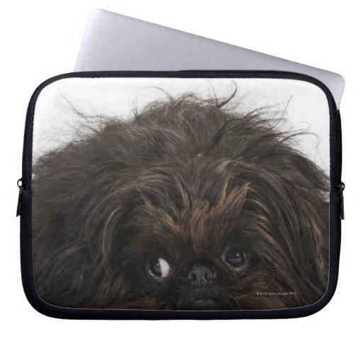 Black dog lying on back - photo#21