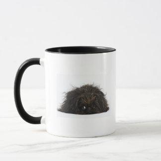 Black Pekingese dog lying down Mug