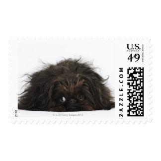 Black Pekingese dog lying down Postage