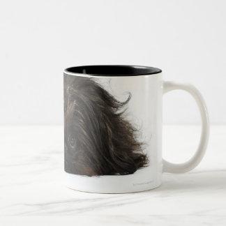 Black Pekingese dog lying down Two-Tone Coffee Mug