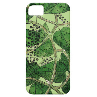 Black Pepper Plant, 1578 iPhone 5 Covers