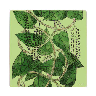 Black Pepper Plant, 1578 Maple Wood Coaster