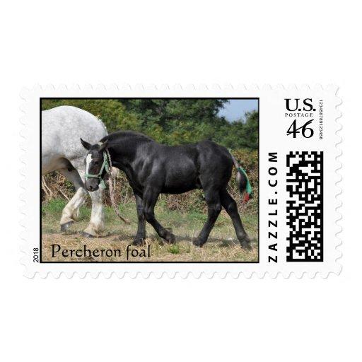 Black Percheron foal Postage