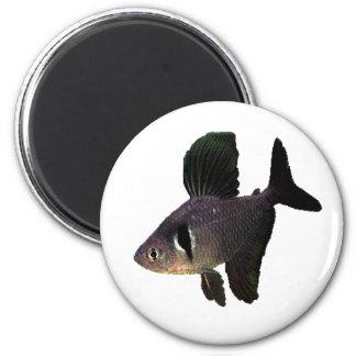 Black Phantom Tetra 2 Inch Round Magnet