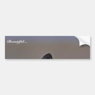 Black Phoebe Bumper Sticker