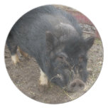 Black Pig Plate
