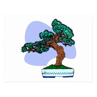 Black Pine Bonsai Graphic Image Postcard