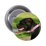 Black Pit Bull Buttons