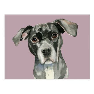 Black Pit Bull Dog Watercolor Portrait Postcard