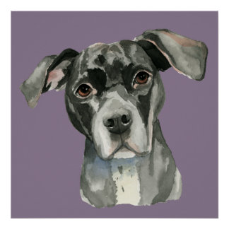 Black Pit Bull Dog Watercolor Portrait Poster