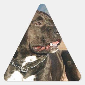 black pitt bull dog triangle sticker