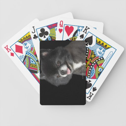 Black Pomeranian looking to the left Bicycle Playing Cards