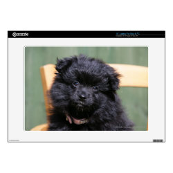 17' Laptop Skin for Mac & PC with Pomeranian Phone Cases design