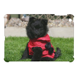 Black Pomeranian Puppy Looking at Camera Case For The iPad Mini