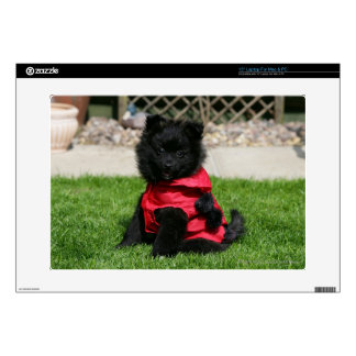 Black Pomeranian Puppy Looking at Camera Laptop Decals