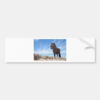 Black pony on sand with blue sky bumper sticker