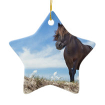 Black pony on sand with blue sky ceramic ornament