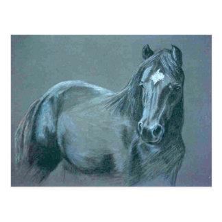 Black Pony Postcard